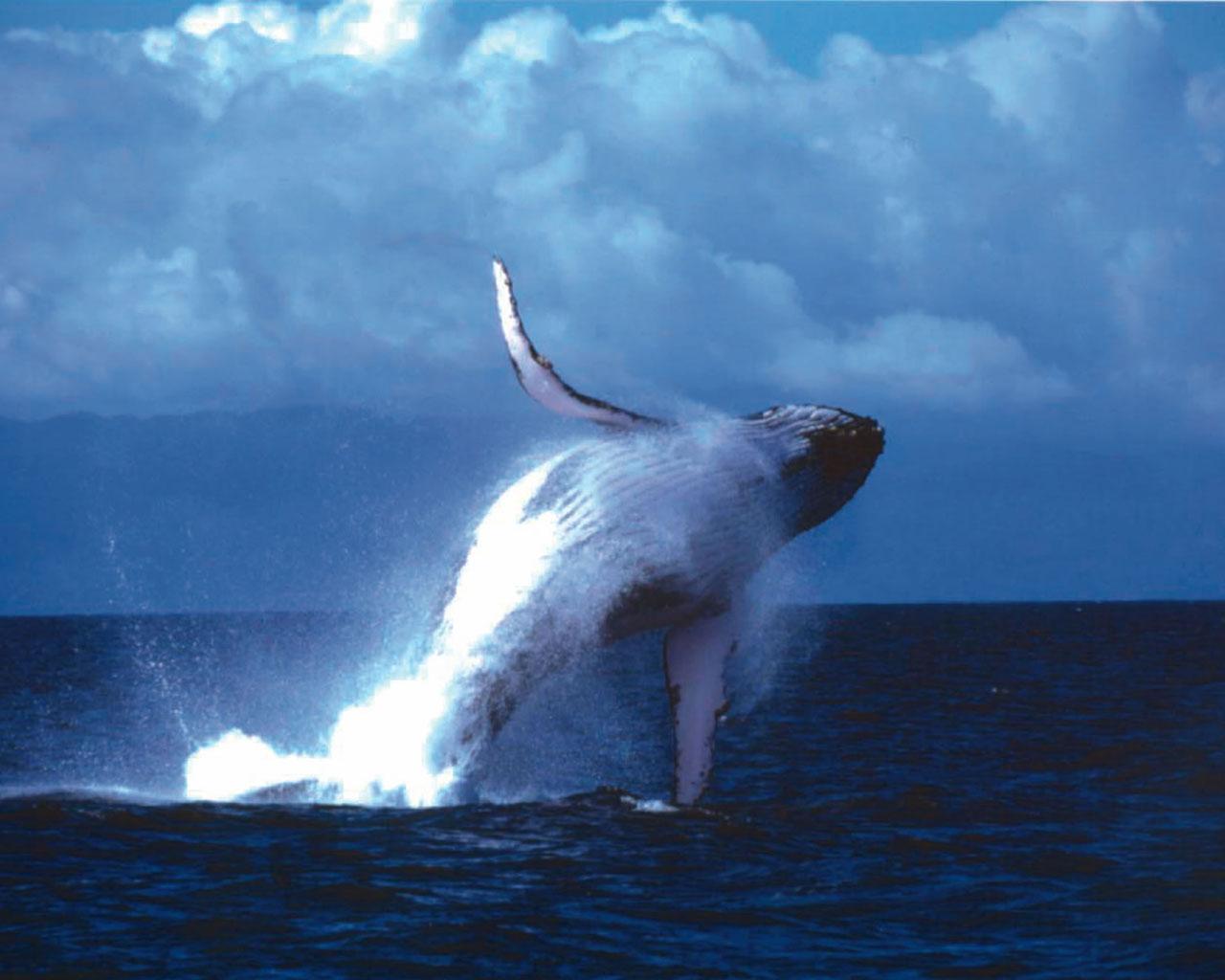 Avistamiento de ballenas en las playas de Perú Playas del mundo