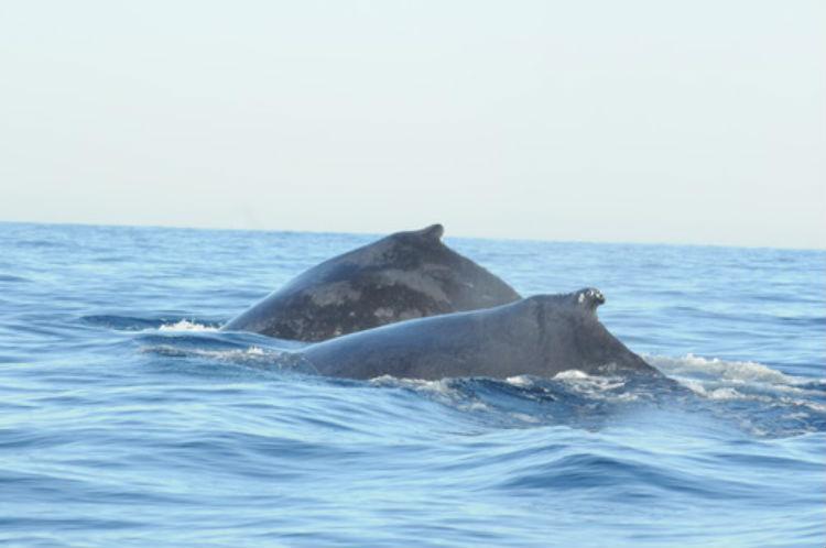 Avistamiento de ballenas en las playas mexicanas Playas en el mundo
