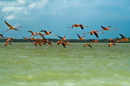 Celestún, una bella playa de Yucatán Playas en el mundo
