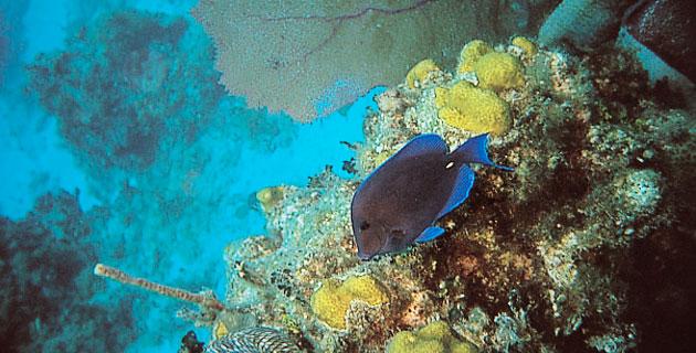Isla Cozumel, arcoiris subacuático Playas del mundo