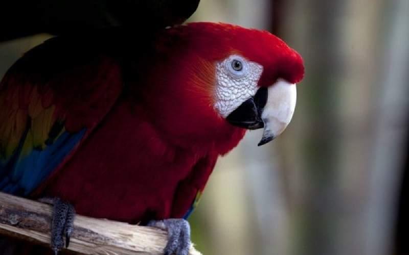 Nicaragua destino propicio para el avistamiento de aves Playas del mundo