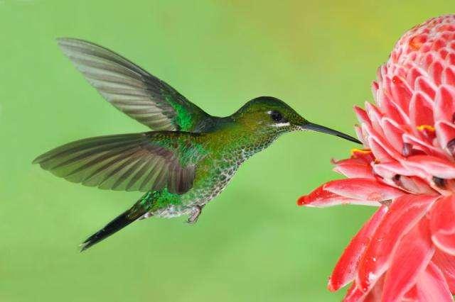 Ecuador destino privilegiado para el avistamiento de aves Playas del mundo