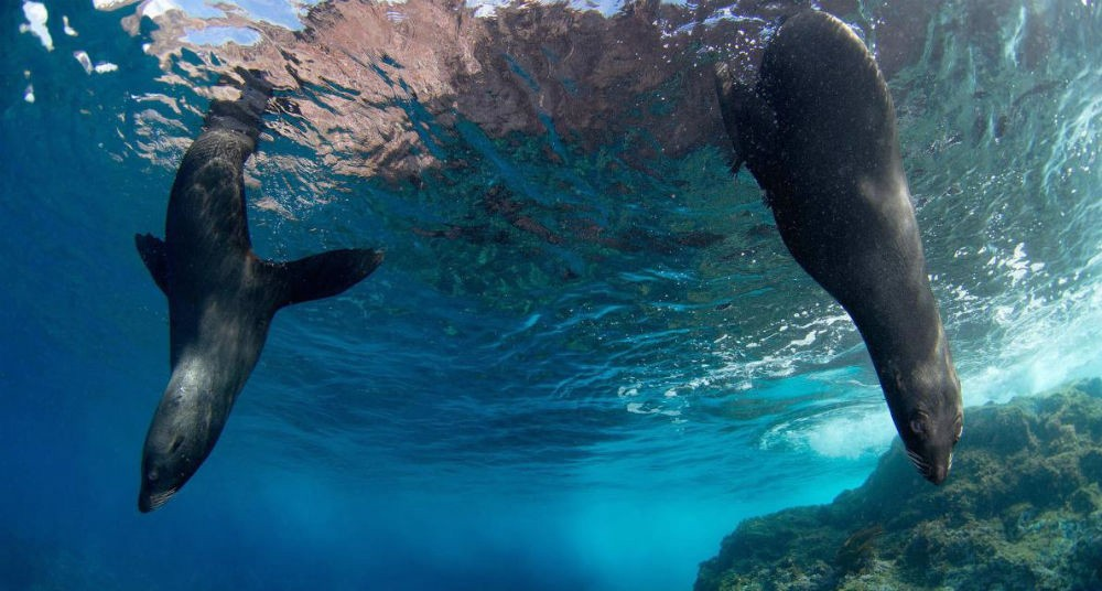 Chile crea la reserva marina más grande de las Américas Playas del mundo