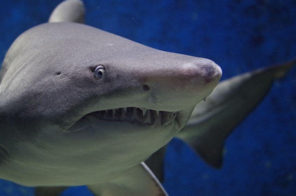 ¿Hay tiburones en Hawai? Playas del mundo